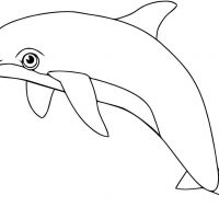 delfin-16