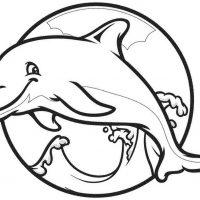 delfin-6