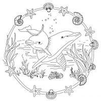 delfin-9