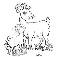 koza-4