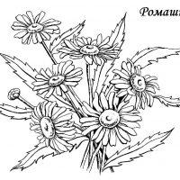 tsvety-23