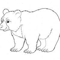 medved-1