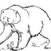 medved-3