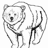 medved-8