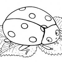 nasekomye-2