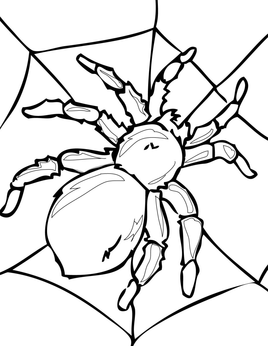 картинки раскраски насекомые раскраски насекомые