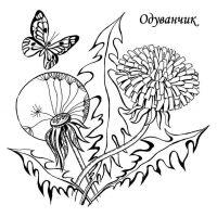 oduvanchik-14