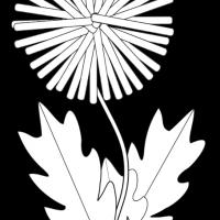 oduvanchik-22