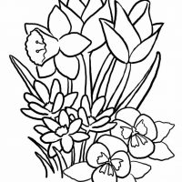 vesennie-tsvety-12