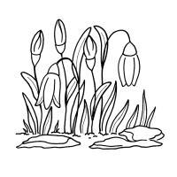 vesennie-tsvety-17