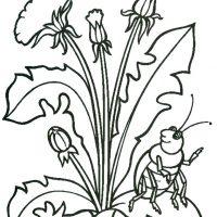 vesennie-tsvety-2