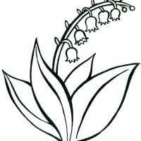 vesennie-tsvety-21