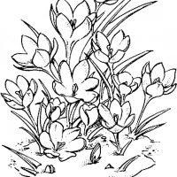 vesennie-tsvety-23