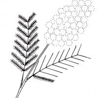 vesennie-tsvety-24