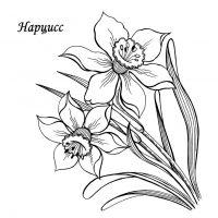 vesennie-tsvety-3