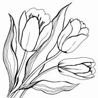 vesennie-tsvety-8
