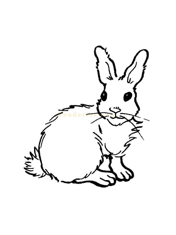раскрашивания зайцы рисунки для